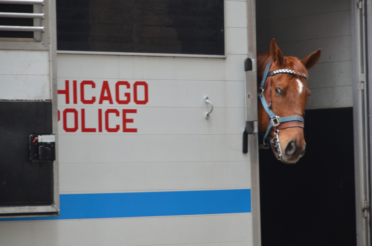 Meet Kelly, a CPD horse of course